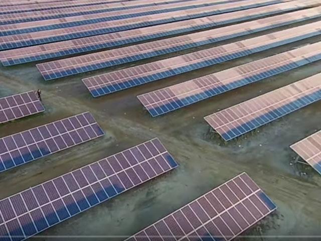 Solar plant adhesive tape for repair